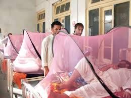 swat dengue