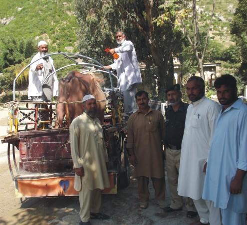 Bunir-Livestock-story-pic-by-Imran-Bunairi-495x451