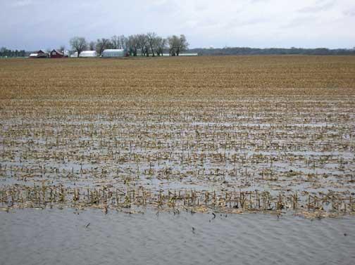 corn-flooded-field